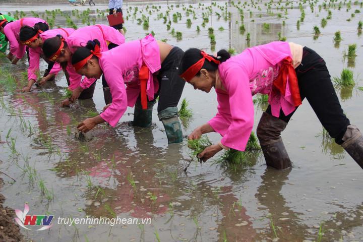 Sôi nổi hội thu cấy lúa của 5 xóm Diễn Quảng.