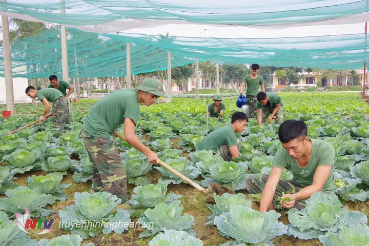 Chiến sĩ Tiểu đoàn BB41, Trung đoàn 764 tích cực tăng gia sản xuất, chuẩn bị nguồn rau xanh cho bộ đội ăn tết cổ truyền.
