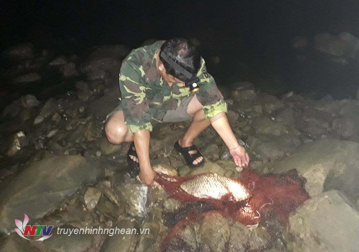Mỗi đêm một thợ săn cá có thể bắt được 5 đến 10kg cá chép.