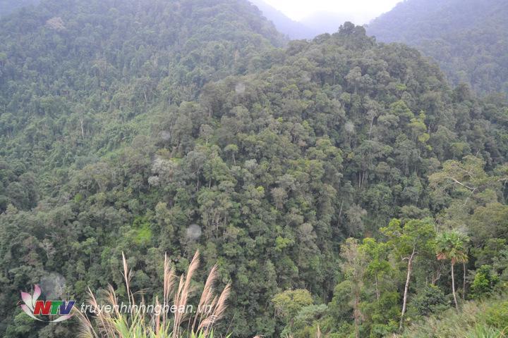 Huyện Con Cuông chủ yếu diện tích rừng tự nhiên, trong khi đó rừng trồng còn chiếm diện tích ít.
