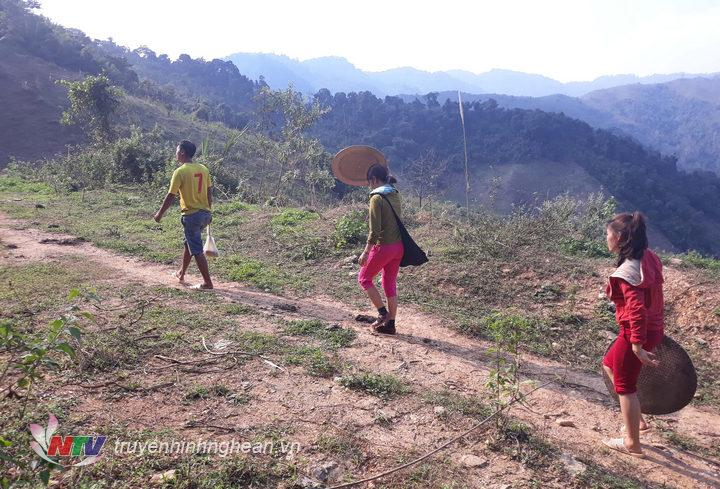 1. Khi đồng bào người Thái ở các huyện vùng cao Nghệ An vào mùa phát nương rẫy cũng là thời gian người dân vào mùa săn trứng kiến về làm món ăn.