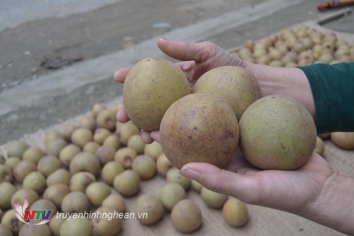 Trung bình 4-5 quả đạt 1kg, giá bán buôn là 20.000 đồng/kg.