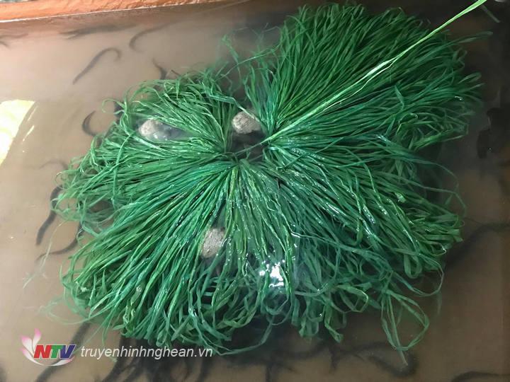 Thức ăn thường để trên chùm dây ni lông để lươn có chỗ ăn và trú ẩn.
