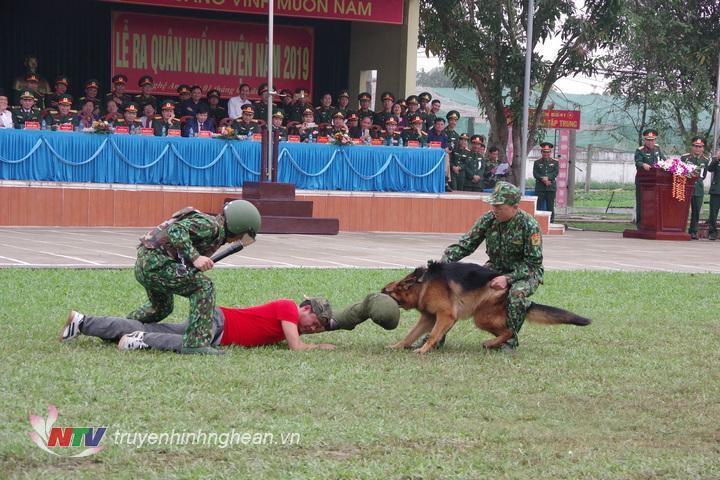 Bộ đội Biên phòng tỉnh sử dụng chó nghiệp vụ để tấn công tội phạm nguy hiểm có sử dụng vũ khí chống trả
