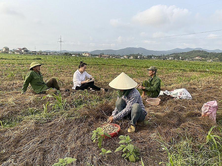 Người dân xã Nghi Lâm thu hoạch hành về nhà cất giữ