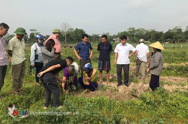 Nhiều bà con nông dân tham quan vụ khoại trên đất 1 lúa tại xã Nghĩa Liên.