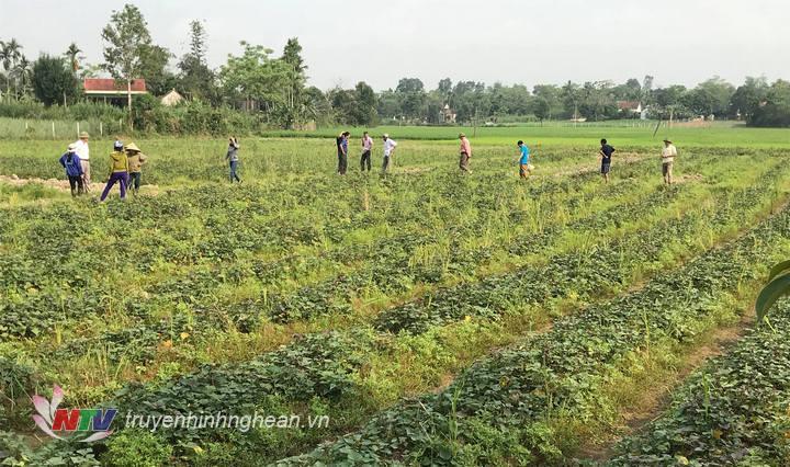 Ruộng khoại trên đất 1 lúa