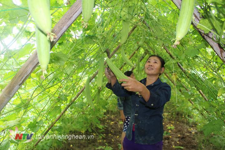huyện Anh Sơn cũng khuyến khích người dân mở rộng diện tích trồng rau ở những vùng đất chủ động nước tưới.