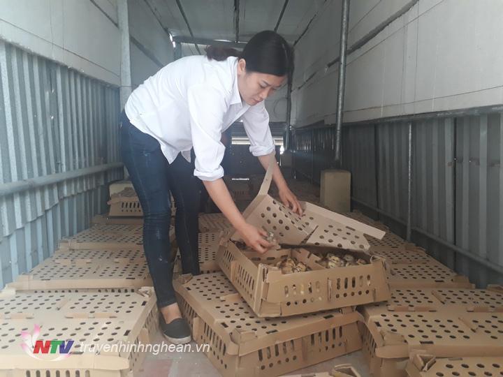 Cán bộ Trạm Chăn nuôi- Thú y Diễn Châu kiểm tra số gà con.