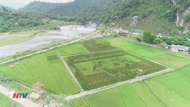 anh2.hình ảnh trên cánh đồng láu được thiết kế theo chủ đề văn hóa của đồng bào dân tộc Thái.