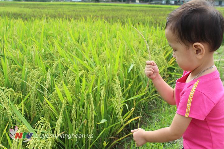 Không những người lớn mà trẻ nhỏ cũng rất thích thú khi đến xem cánh đồng láu đa sắc.