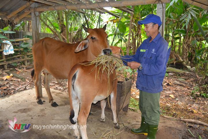 ảnh 1. ông vi Trung Mãu bản bãi văn xã Chi Khê , phấn khỏi bởi gia đình mai mắn được hỗ trợ 2 con bò sinh sản, đến nay dang phát triển tốt