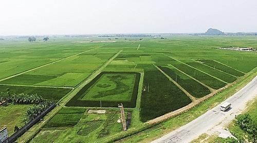 Cựu binh Phan Văn Hoà muốn tạo nên bước đột phá khác từ du lịch nông nghiệp. Ông cùng các cộng sự đã tạo ra ruộng lúa độc đáo có hình bản đồ đất nước Việt Nam với những vệt màu khác biệt vào dịp giải phóng miền Nam năm 2016