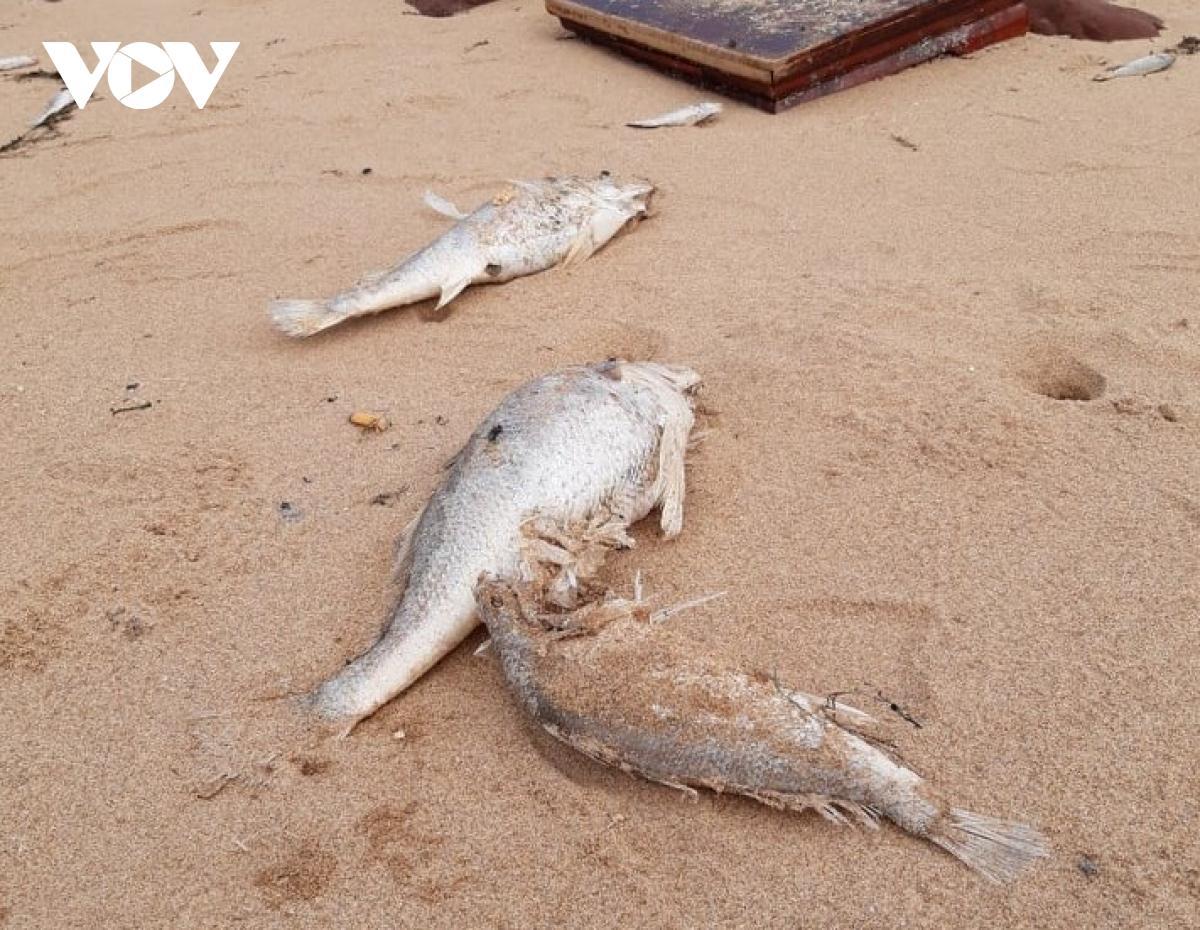 Cá chết bất thường dạt vào bờ biển ở Nghệ An.