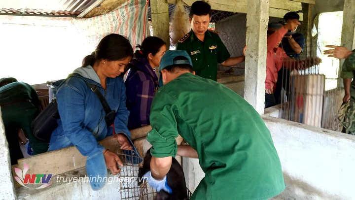 Lợn giống được đồn chăn nuôi tại chỗ để tặng người dân