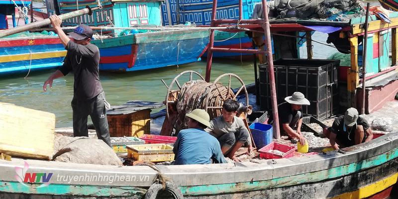 Ngư dân thu hoạch cá tại cảng cá Lạch Vạn.