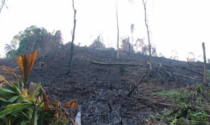 Một khu vực rừng bị chặt phá thuộc địa bàn xã Châu Thuận. (Tư liệu)