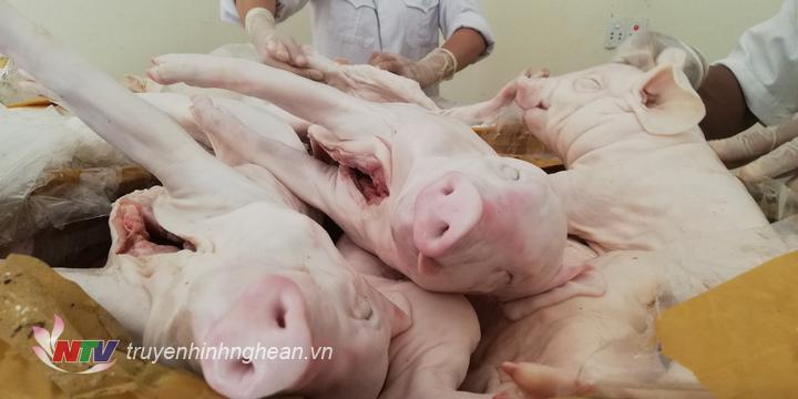 Số lợn con đã qua sơ chế bị bắt trong vụ vận chuyển.