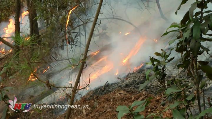 Đám cháy bùng phát dữ dội trong đêm.