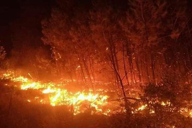 Lửa cháy kinh hoàng bao trùm khu rừng.