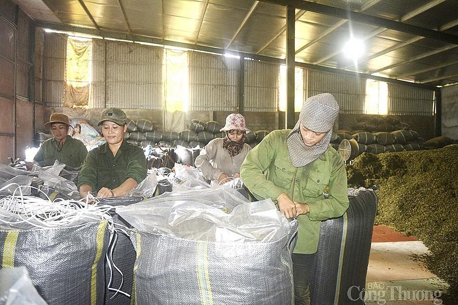 Xưởng chế biến chè tại xã Thanh Mai (Thanh Chương) bao tiêu chè búp tươi cho người dân, nhưng đang rất khó đầu ra.