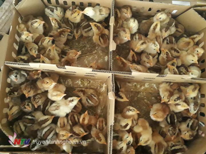 Toàn bộ số gia cầm gà, vịt đều không có giấy kiểm dịch.