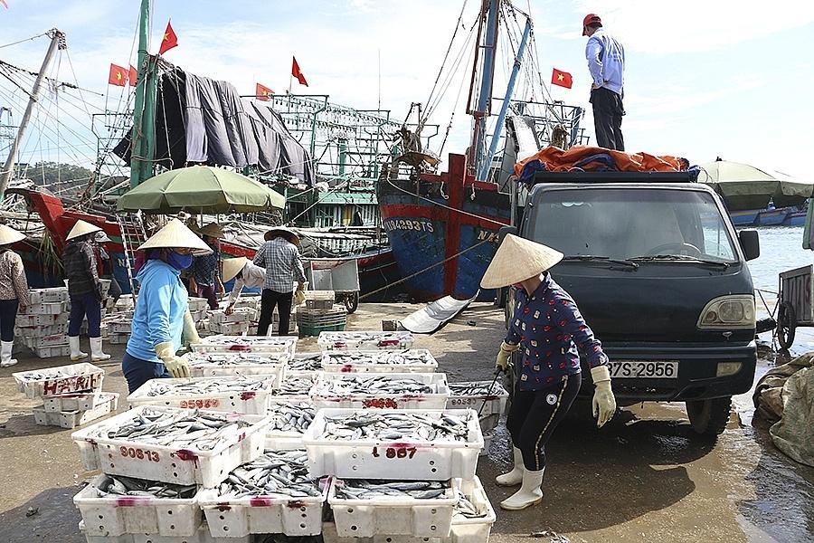 Ngành thuỷ sản nghệ An đang chung tay cùng cả nước tích cực triển khai các biện pháp nhằm đẩy mạnh việc chống khai thác hải sản bất hợp pháp.