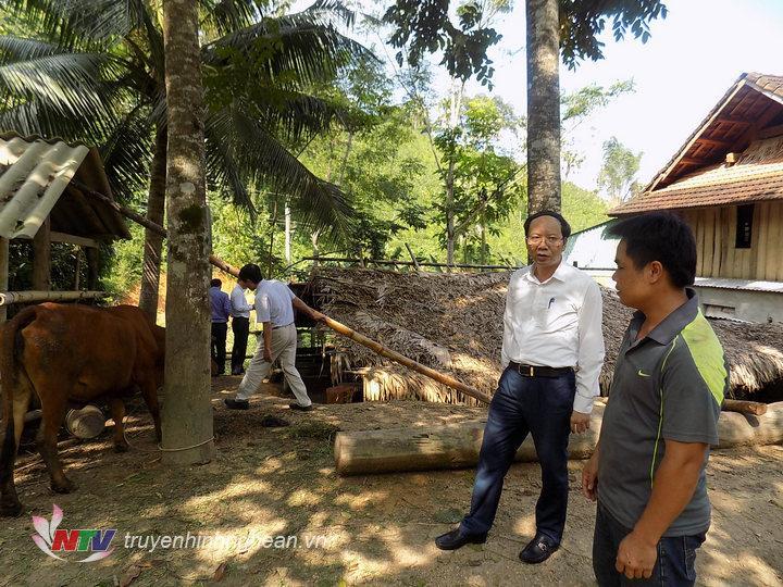Dc Bùi Thanh An thăm mô hình nuôi bò hiệu quả của gia đình anh Lương văn Nam bản Hiêng xã Bắc Sơn, Quỳ Hợp