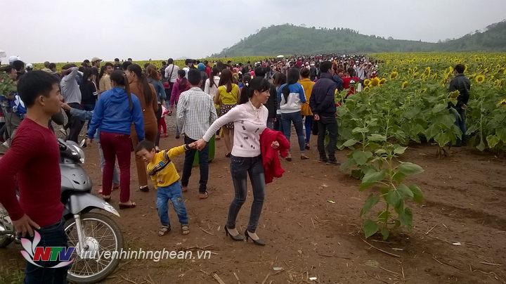 Dòng người đổ về cánh đồng hoa Nghĩa Đàn đông hơn vào dịp nghỉ lễ Tết dương lịch.