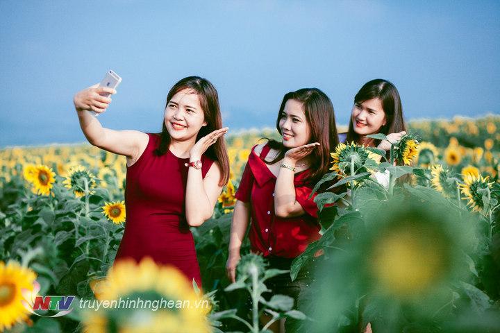 Tự ghi lại những bức ảnh đẹp nhất bên hoa Mặt trời