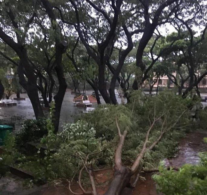Gió và mưa lớn xuất hiện ở Bình Định khiến cây bị gãy.