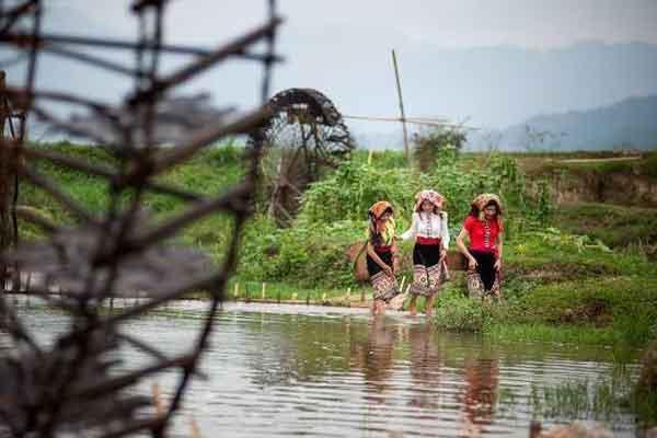 Cọn nước trên cánh đồng Tạ Chum - Hoa Tiến - Châu Tiến, Quỳ Châu.