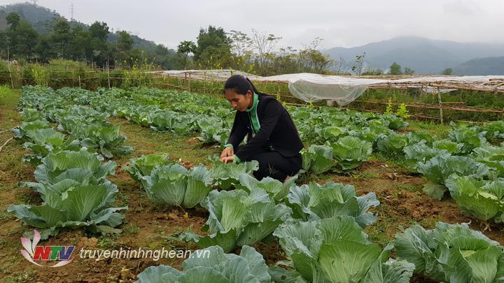 Mùa nào thức ấy, bà con trồng đủ các loại rau sạch quanh năm không cho đất nghỉ,