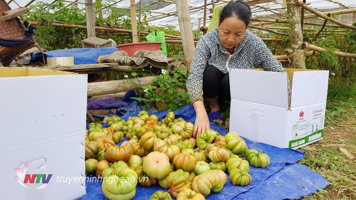 """Sản phẩm """"Cà chua múi bản Phòng"""" đang được bà Lô Thị Diêu đóng gói để vận chuyển cho khách hàng tại Hà Nội."""
