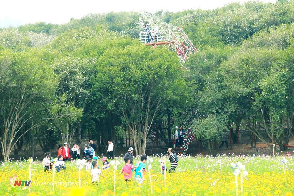 Du khách có thể thỏa thích ngắm toàn cảnh rừng hoa sở từ trên cầu hoa.