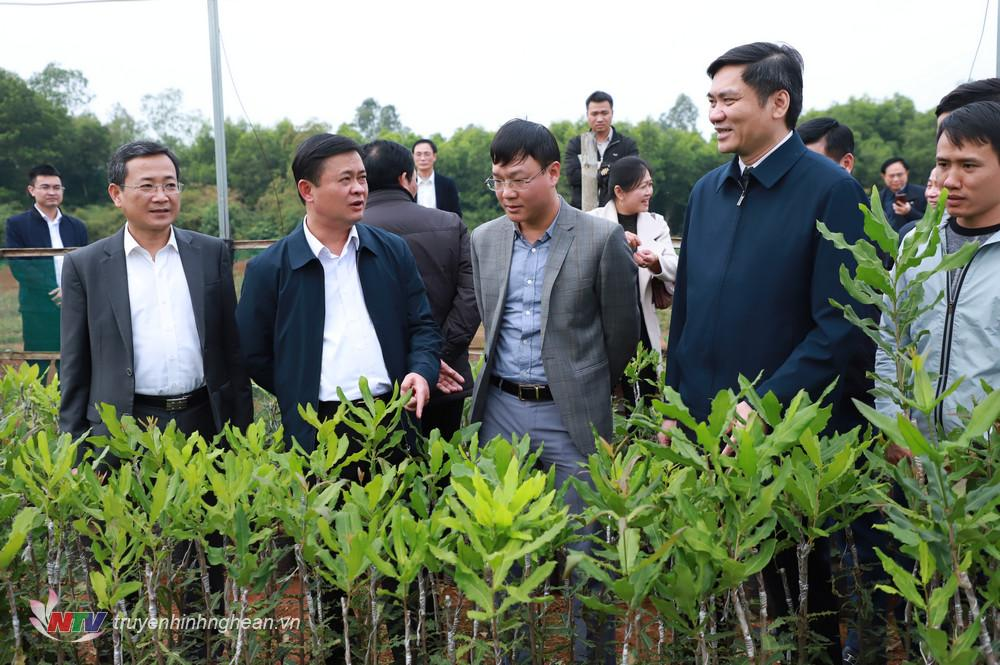 Bí thư Tỉnh ủy Thái Thanh Qúy thăm mô hình trồng thử nghiệm cây mắc ca tại xã Đông Hiếu.