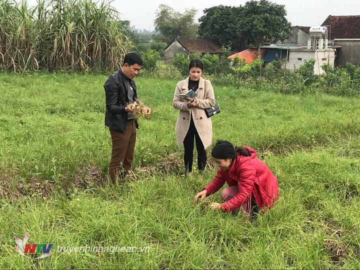 Hơn 3,5ha hành tăm đươc trồng tại xã Nghĩa Trung .