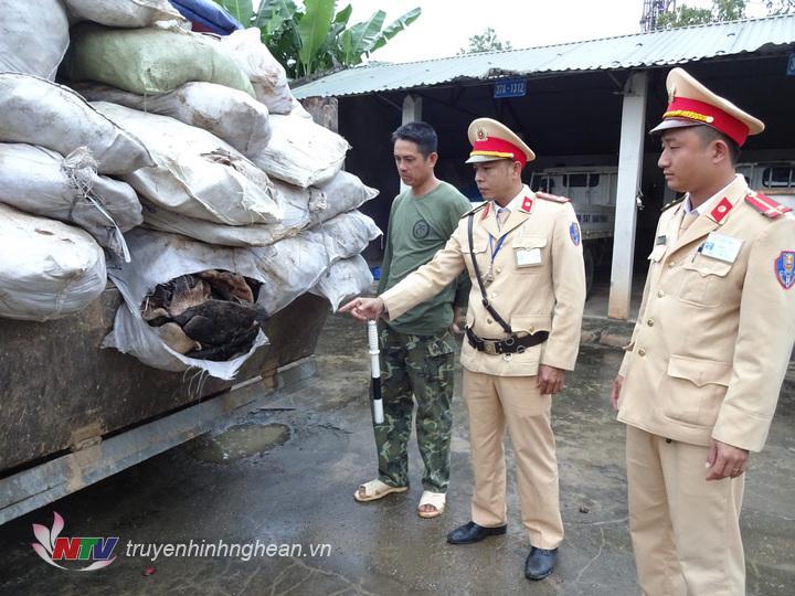 Lái xe cùng tang vật được đưa về đội CSGT Công an huyện Yên Thành để tiếp tục điều tra làm rõ.