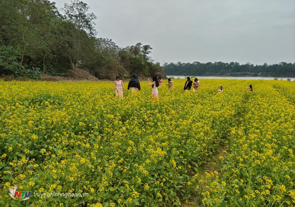 Du khách trải nghiệm chụp ảnh tại vườn hoa