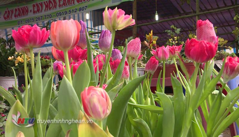 Bên cạnh các loại cây trưng Tết truyền thống, nhiều loại hoa, cây lạ, nhỏ xinh được ưa chuộng trong những năm gần đây.
