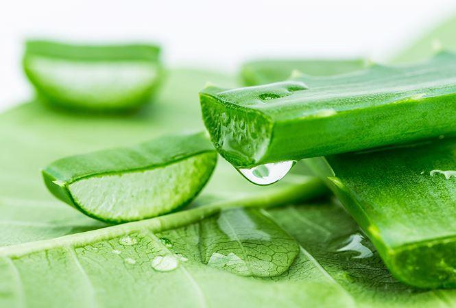 Cây lô hội Aloe vera: Bạn biết rằng lô hội tốt cho làn da của bạn, nhưng bạn cũng nên biết rằng nó có chứa các hợp chất được gọi là anthraquinon có tác dụng như thuốc nhuận tràng tự nhiên. Thêm một vài giọt gel lô hội vào nước uống của bạn hoặc dùng nước ép lô hội có thể chống được táo bón.
