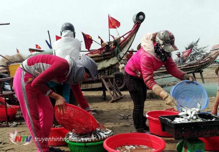lượng cá trích khoảng 10 tấn/ngày ngoài tiêu thụ với giá từ 1-1,5 triệu đồng/tạ tại các chợ thì nhiều cơ sở còn thu mua về làm chượp chế biến nước mắm, làm bột cá phục vụ chăn nuôi.