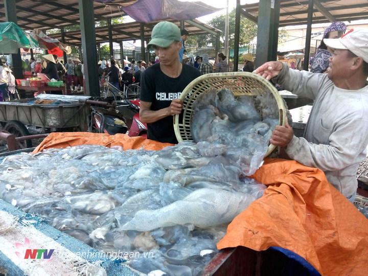 Với sản lượng khoảng 100 tấn/ngày, sứa đều được 3 sơ sở lớn tại biển Diễn Kim và Diễn Hải thu mua với giá 1 triệu đồng/tấn. Tất cả đều được chế biến thành nhiều sản phẩm như sứa khô, sứa ăn liền… phục vụ thị trường trong cả nước và xuất khẩu.