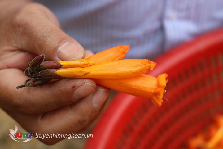 Những bông hoa Đoọc Pịt có màu vàng rực sẽ được chọn nhặt về sử dụng.