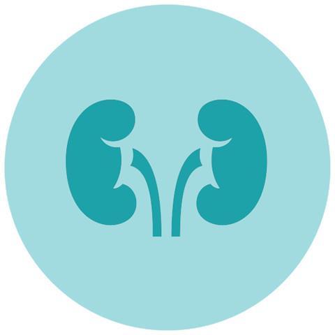 Sỏi thận: Vì sỏi thận có thể gây tắc đường tiết niệu và ngăn đào thải nước tiểu, các vi khuẩn trong đường tiết niệu sẽ có thời gian để phát triển. Ngược lại, viêm đường tiết niệu không được chữa trị kịp thời cũng có thể gây tổn thương thận.