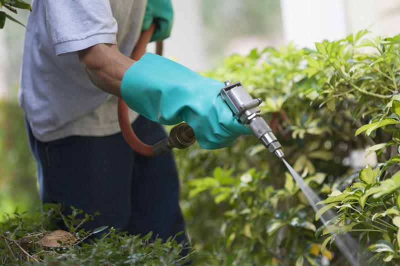 Xịt muỗi cho vườn của bạn: Nếu bạn sống ở khu vực muỗi sinh sôi quá mức, bạn có thể sử dụng thuốc diệt côn trùng cho sân vườn nhà mình.