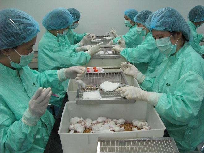 50 chuột thí nghiệm đã được tiêm vaccine dự tuyển Covid-19 ngày 26/4.