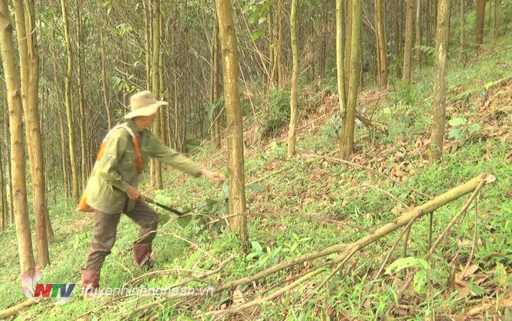 ông Lô Hồng Sơn – Bản Chà Coong xã tái định cư Thanh Sơn, huyện Thanh Chương mỗi ngày 2 lần vào thăm rừng phát sẻ đường băng cản lửa, thu gom thực bì..