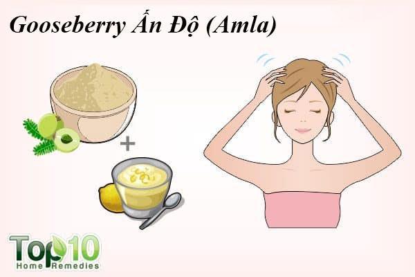 Gooseberry Ấn Độ (Amla) là một phương thuốc phổ biến được sử dụng để kiểm soát rụng tóc. Nó giúp tăng cường các nang tóc, kích thích sự tăng trưởng tóc và ngăn ngừa tóc gãy rụng, chủ yếu là do các chất chống oxy hóa và vitamin C có trong đó. Vitamin C trong lô hội cũng giúp tái tạo collagen rất quan trọng cho sự phát triển của tóc và hỗ trợ sự hấp thu sắt, nhờ đó giữ cho mái tóc của bạn khoẻ mạnh.