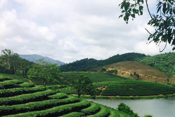 Ngày 1/7, Thanh Hóa - Thừa Thiên Huế ngày nắng, chiều tối có mưa dông. Ảnh: Đảo chè Thanh Chương, Nghệ An.